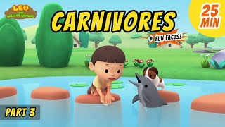 Carnivores (Part 3/6) - Animals Stories for Kids | Educational | Leo the Wildlife Ranger