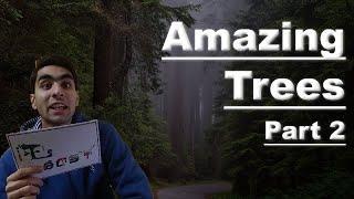 Let's Discuss - (Amazing Trees Part 2)