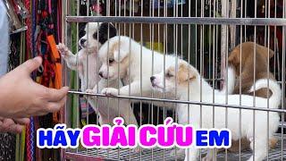 Chợ Chó Mèo lớn nhất Sài Gòn: Nơi Thú Cưng rất cần giải cứu!