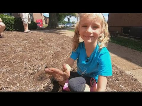 Community steps up after thieves destroy a little girl's garden in Spanish Lake