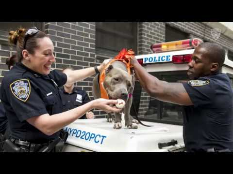 Police Commissioner O'Neill Visits Animal Cruelty Victims Rescued Through ASPCA/NYPD Partnership