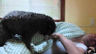 Dog Trained To Wake Up Lazy Owner.