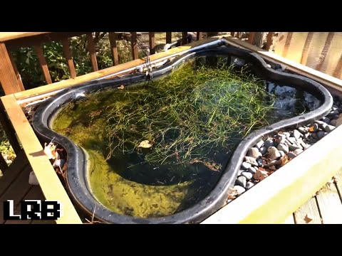Keeping TROPICAL Aquarium Fish Outdoor Tub Ponds WARM All Year Round Even In WINTER