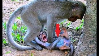 OMG !! MOM I'M HURT !! Innocent Baby Daniela | Why Monkey Kari Doing Like This To Poor Baby Daniela.
