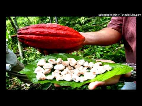 Haiti Cacao | Cacao Organic | Culture | Produit Local | Nou Pou Vann C-PROJECTS