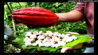 Haiti Cacao | Cacao Organic | Culture | Produit Local | Nou Pou Vann C-PROJECTS