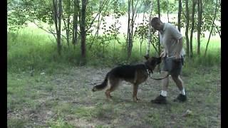 Дрессировка собак ОКД собак Базовое упражнение 8  Выпрашивание у дрессировшика игрушки или пищи