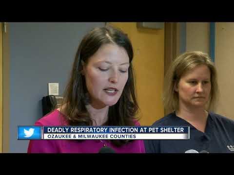 """Two dogs test positive for """"Strep Zoo"""" Wisconsin Humane Society - Ozaukee Campus"""