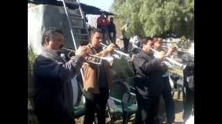 La Tradicional De Mazatlan - Paloma Habanera