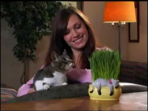 - Chia Cat Grass Planter TV Spot - YouTube