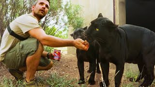 operation-fang-black-leopards-hyenas-lion-whisperer-membership