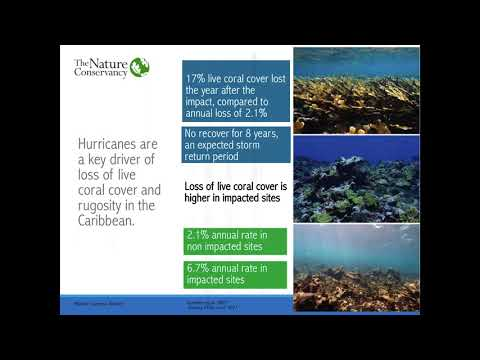 Insuring nature: An insurance policy for the Mesoamerican Reef
