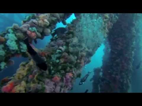 Oil Rig and Olympus Wreck Dive