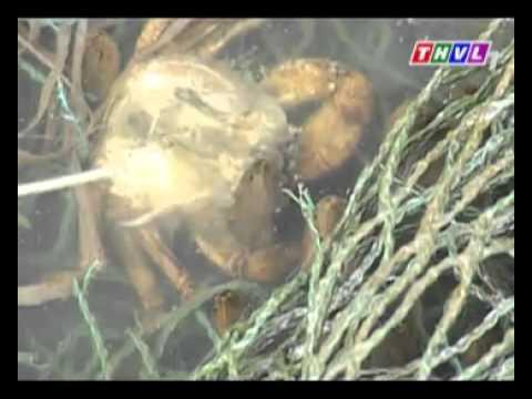 CHĂN NUÔI: mô hình nuôi lươn