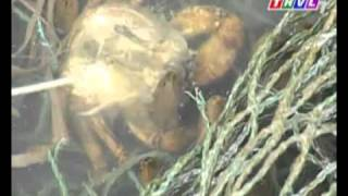 Video | CHĂN NUÔI mô hình nuôi lươn | CHAN NUOI mo hinh nuoi luon