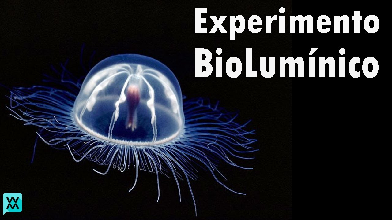 Bioquimica + Experimentos | ft Aythami