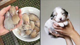 AWW CUTE BABY ANIMALS Videos Compilation cutest moment of the animals - Soo Cute! #39