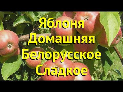 Яблоня домашняя Белорусское Сладкое. Краткий обзор, описание malus domestica Belorusskoe Sladkoe