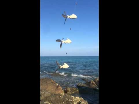 Flying Fish Wooden Wind Spinners / Fly Fishing / Hanging Mobile