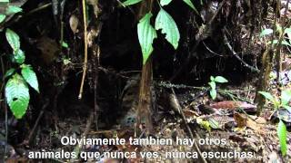 Descubriendo animales y plantas de la selva tropical - Discovering Rainforest Animals and Plants