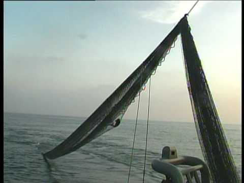 Fishing In Bay Of Bengal 2
