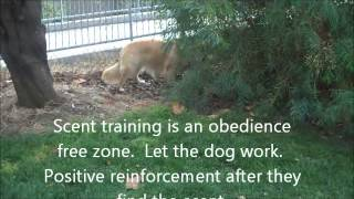 Dog Training Tips: How To Scent-train Your Dog