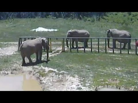 LIVE: Elephant Sanctuary in Tennessee | The Dodo LIVE