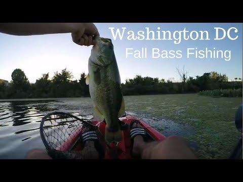 DC URBAN BASS KAYAK FISHING : 3 pound FALL BASS after work!