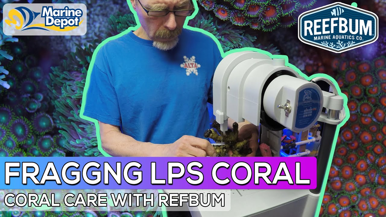 How To Frag LPS Coral With the Gryphon Aquasaw