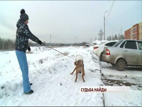 Видео Дворнягу, которую избили битой в Ярославле, успешно прооперировали