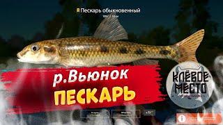 Русская рыбалка 4 Фарм серебра р Вьюнок пескарь рр4 вьюнок троф пескарь