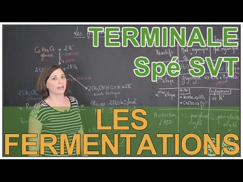 Les fermentations - Spé SVT - Terminale - Les Bons Profs