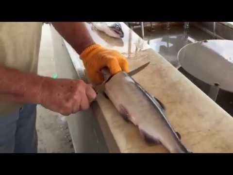 Salmon Cleaning - How to Clean and Fillet Salmon