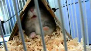Hamster rastet aus!