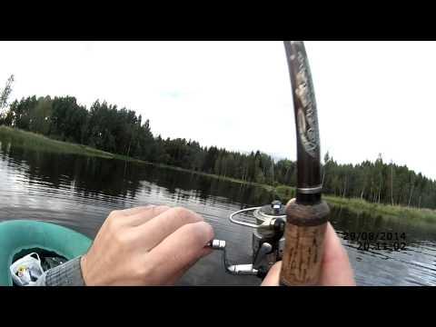 с какого числа разрешена рыбалка на спиннинг в ленинградской области