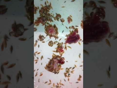 Brighton Beach 'Critters' Swarm For Meat After Feasting on Teen's Leg