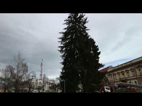 KARLOVAC: Najviše okićeno božićno drvce u Hrvatskoj