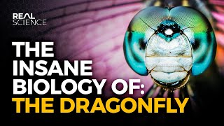 The Insane Biology of: The Dragonfly