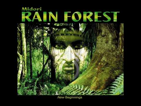 THE CLOUD FOREST - MIDORI