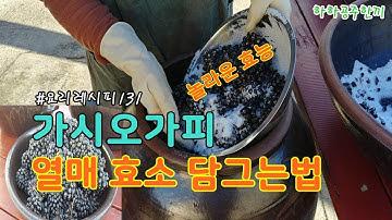 #오가피열매 효능 오가피 효소 담그는방법 #오가피나무 효능 최고~!!