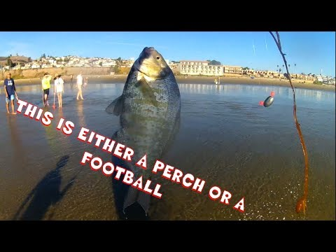 Fishing Pismo Beach CA In November! Perch In The Surf!