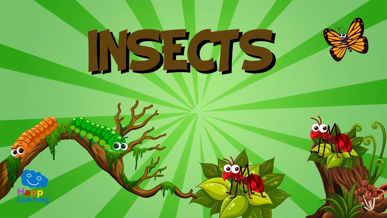 Download Insects   Educational Videos for Kids