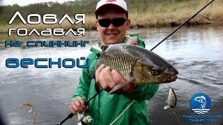 Голавль на спиннинг видео. Малая река. Приманки, техника ловли. Рыболовный дневнник