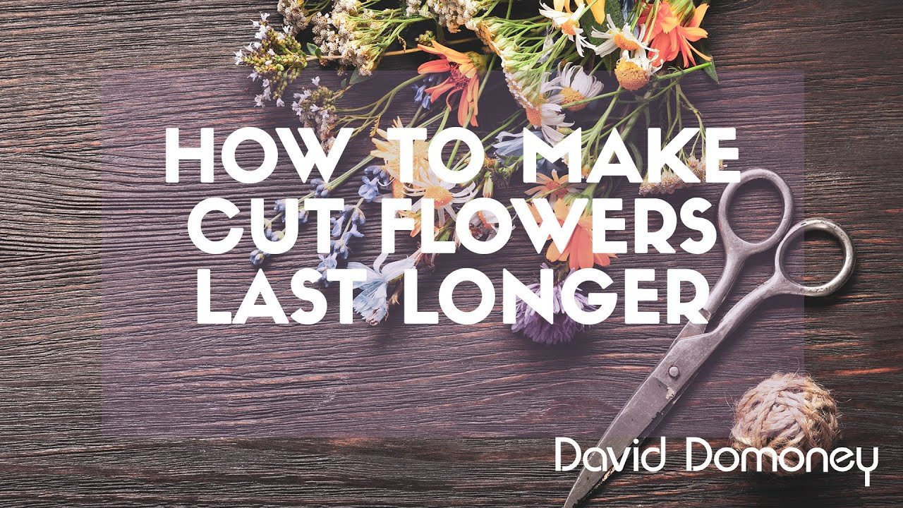 how to keep flowers last longer