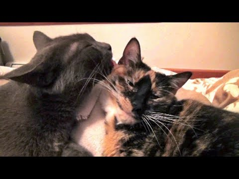 Monkey Cleans Cupcake - 2 Cats In Love