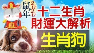林海陽 2020十二生肖運勢 財運大解析-狗 109年金鼠年(庚子) 20190105