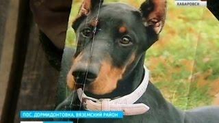 Вести-Хабаровск. Охота на породистых собак в Дормидонтовке
