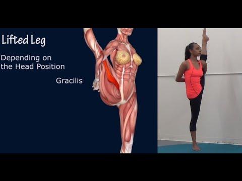 How To Svarga Dvidasana Bird of Paradise Yoga Pose Muscle Anatomy EasyFlexibility