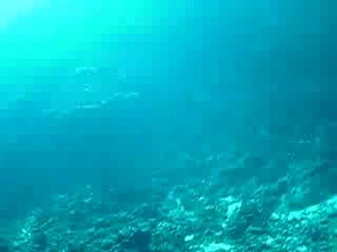 Whales singing in Vava'u Tonga, heard while diving