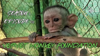 Baby monkey vet trip, baby with a slight twist, integrations, foster moms - Season 3 episode 10